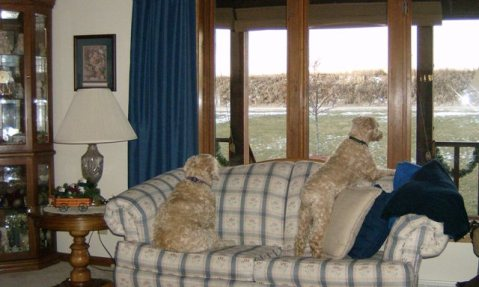 PJ - Sophie    Watching