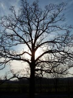 Winter Oak, Crandall, GA