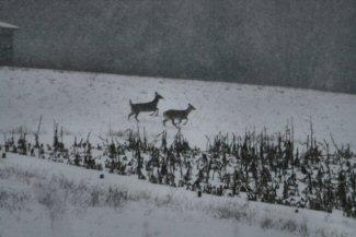 deer-small.jpg