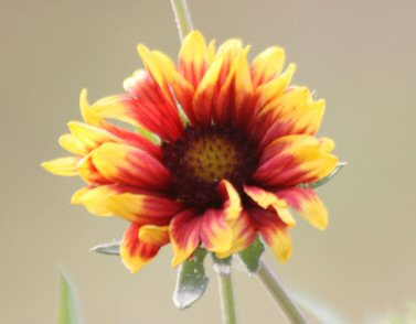 wildflower-small.jpg